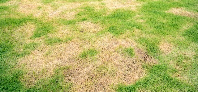 The remedy for root rot and rainfall